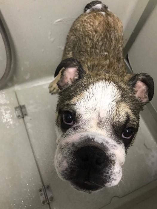 Pet Grooming | Ascot Animal Veterinary Hospital