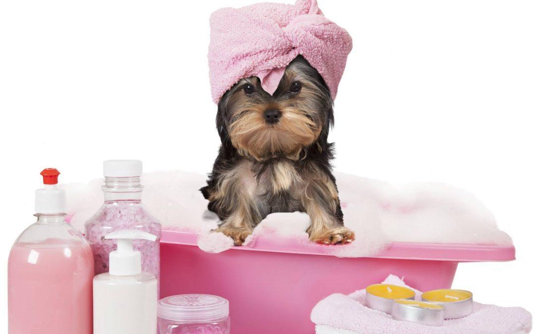 Grooming at Ascot Veterinary Hospital